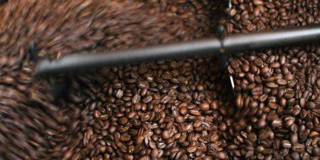 Taze kahve nedir?